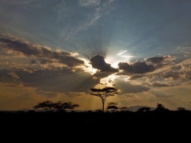 Raggi di luce sulla savana