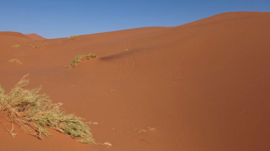 hidden vlei tracce deserto namibia