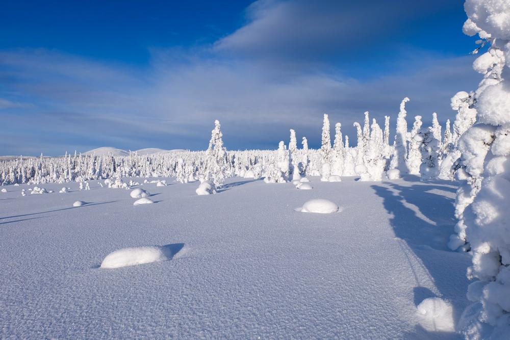 inverno lapponia pallas yllastunturi tykky panorama