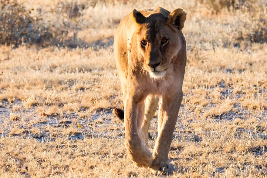 itinerario viaggio namibia auto a noleggio etosha