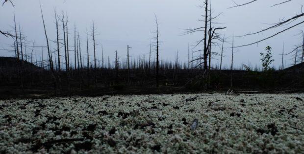 kamchatka foresta pietra