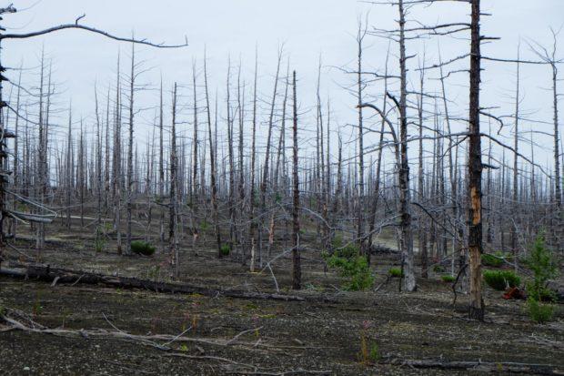 kamchatka foresta pietrificata