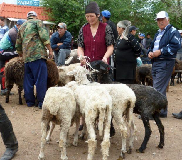 kirghizistan kochkor animali mercato