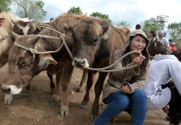 kirghizistan mercato animali kochkor