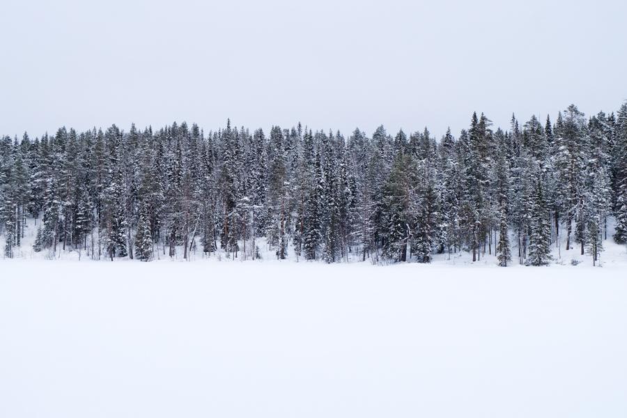 Bianco-nero-bianco: inverno in Lapponia