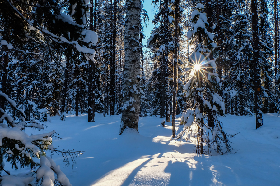 lapponia inverno oulanka foresta controluce