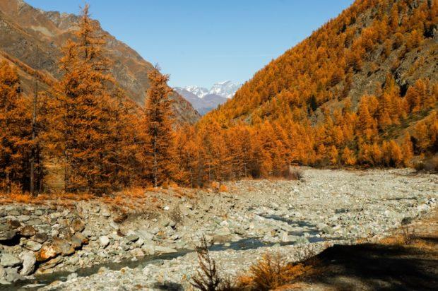 larici autunno val di rhemes