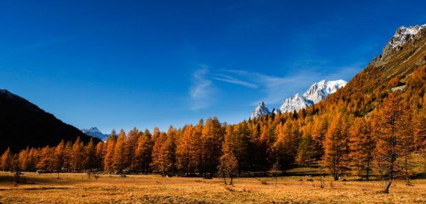 larici autunno val ferret