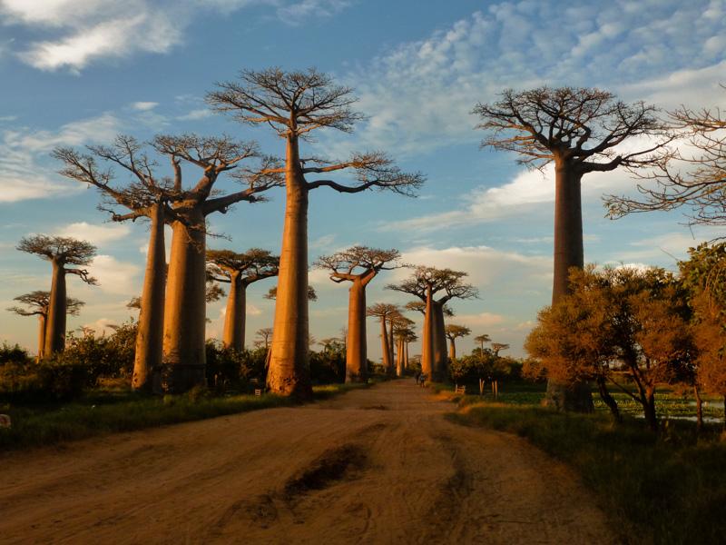 madagascar baobab tramonto