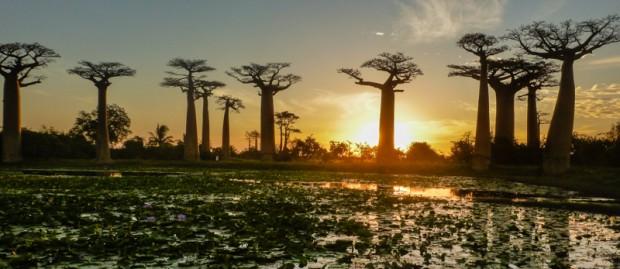 madagascar baobab panorama