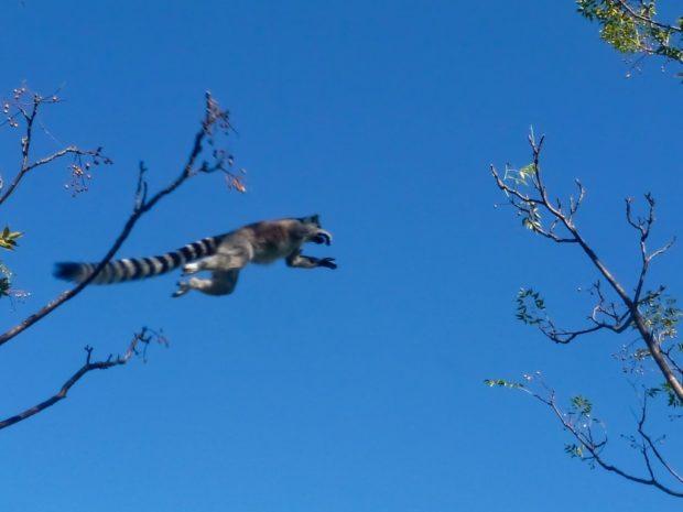 Il salto del lemure – Madagascar