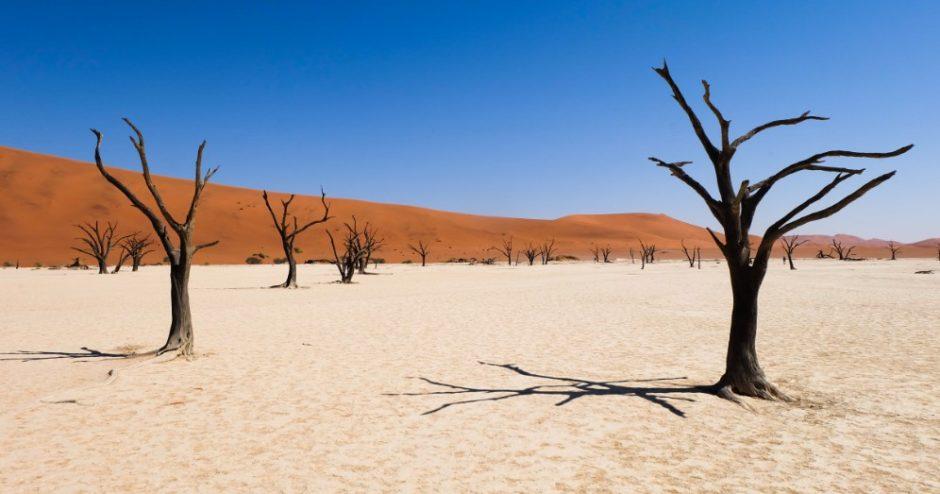 namibia deadvlei piante morte