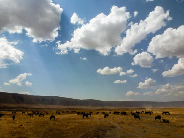 ngorongoro tanzania gnu