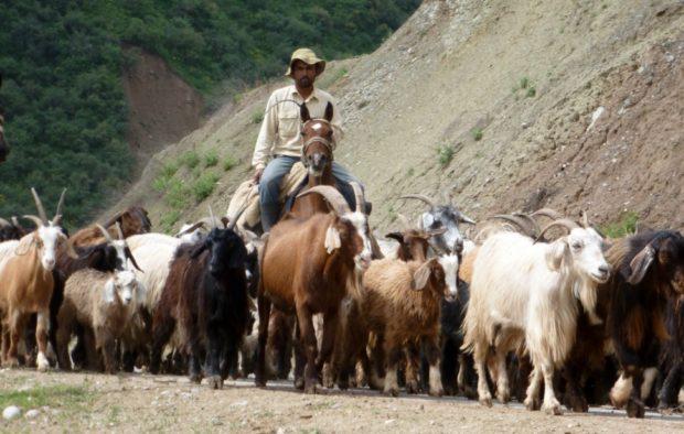 Tagikistan: pecore sulla Strada del Pamir