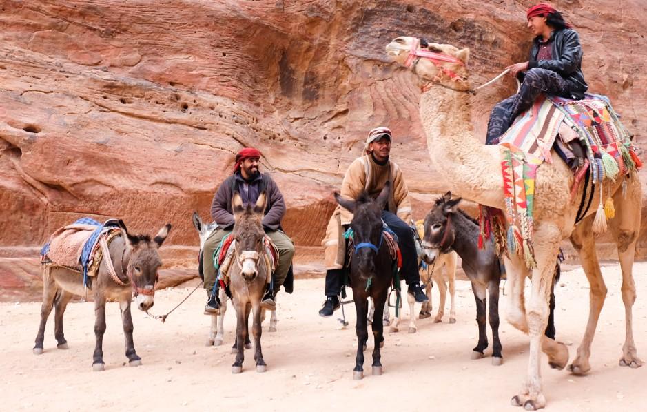 petra beduini cammelli