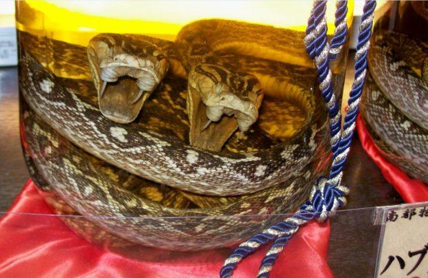 Un sorso di Habushu, il saké al serpente