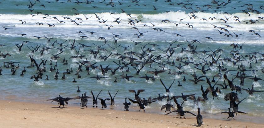 sandwich harbour cormorani