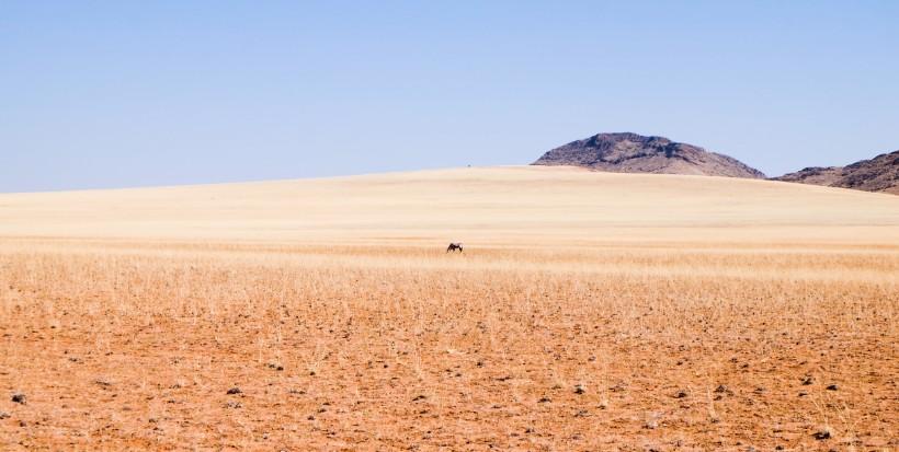 savana orice viaggio namibia