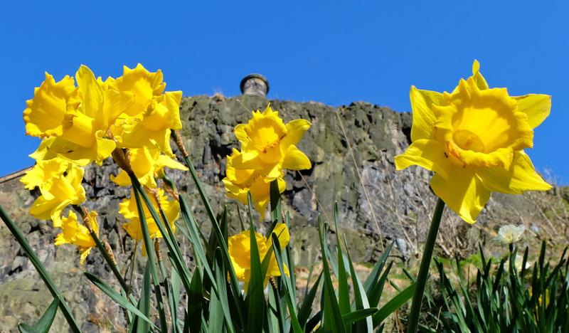 Scozia Edimburgo fiori