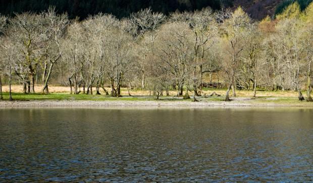 Scozia foresta