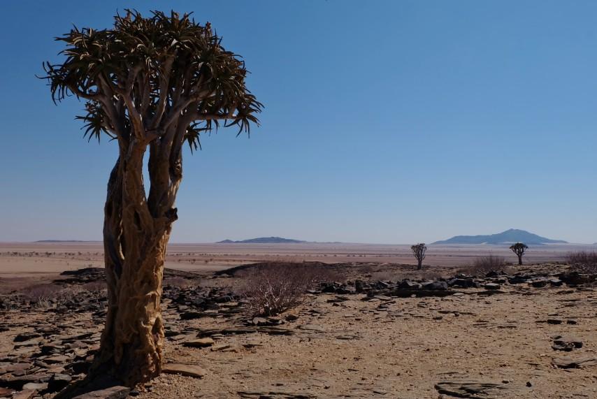 strada aloe viaggio namibia deserto