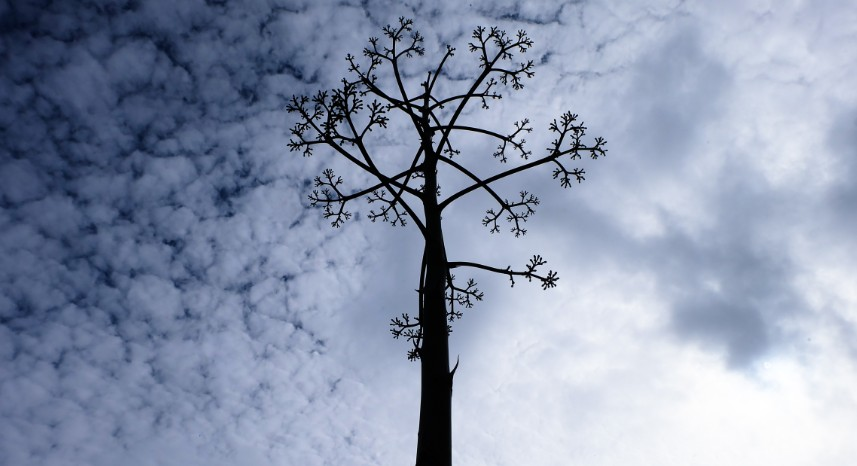 trekking cova de paul pianta agave