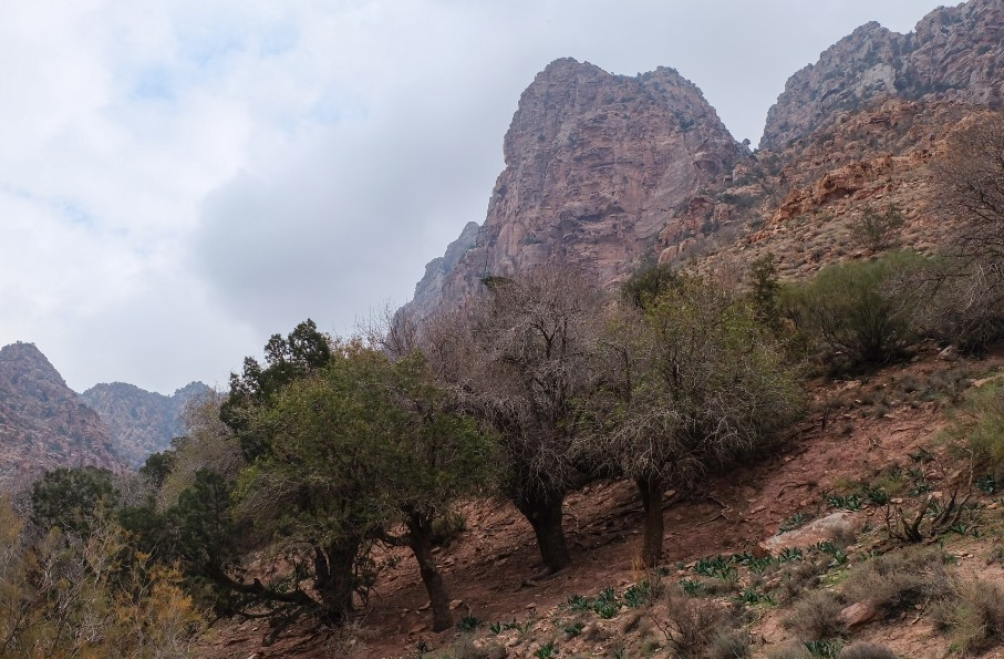 trekking dana giordania alberi