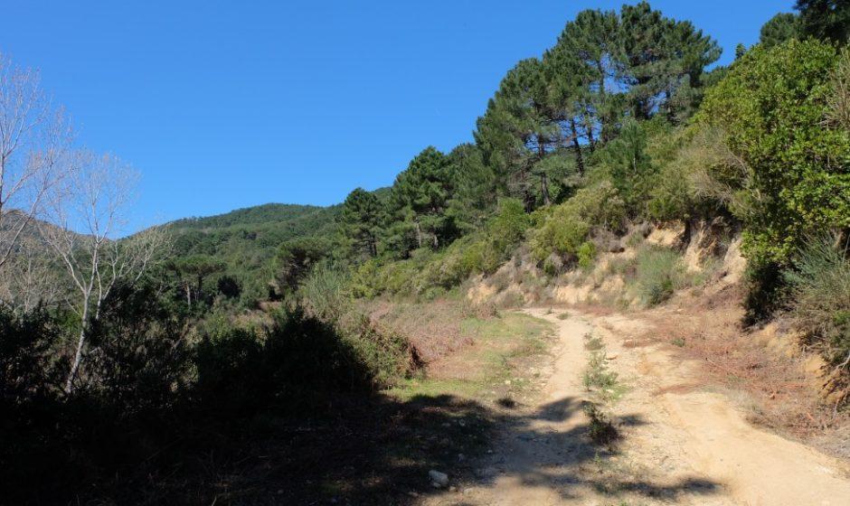 trekking grande traversata isola elba GTE monte perone salita