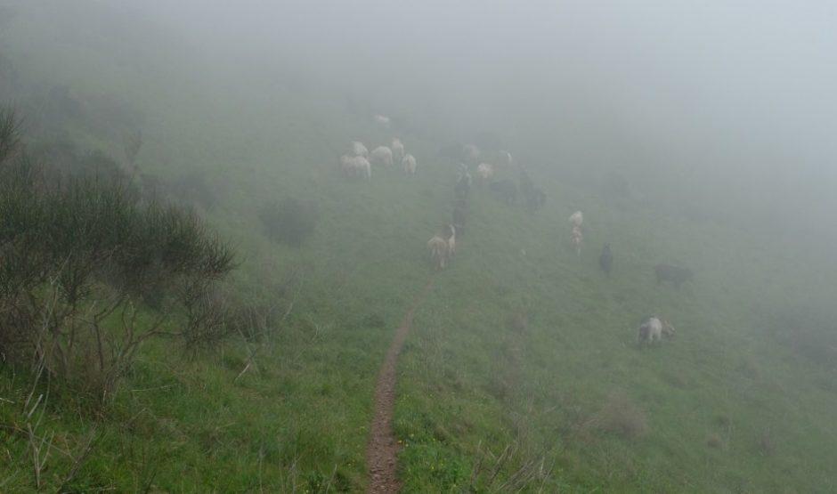 trekking grande traversata isola elba GTE pecore