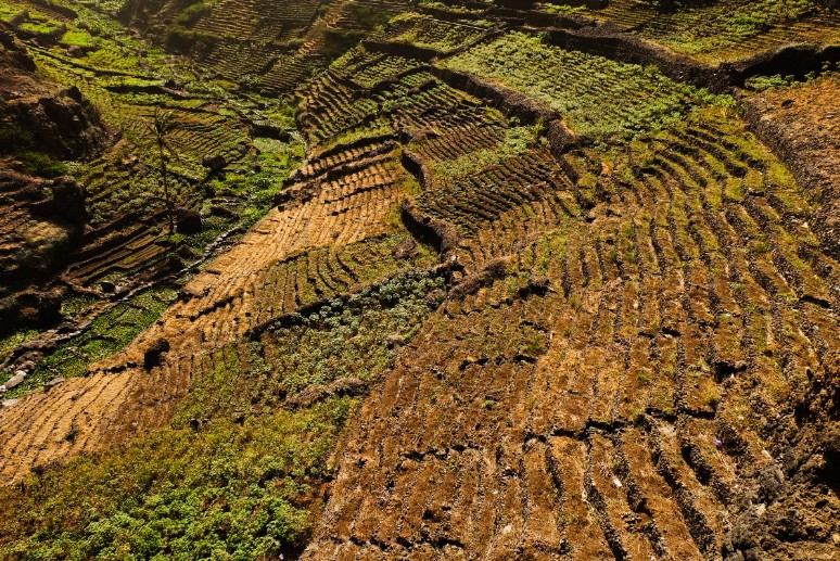 trekking santo antao terrazze coltivate