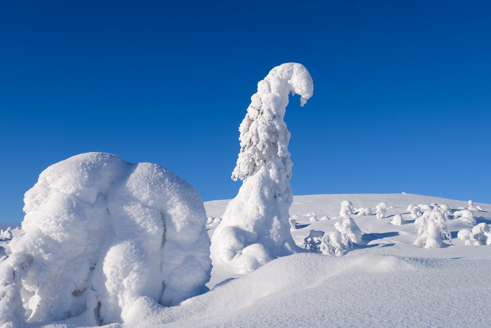 tykky viaggio inverno lapponia pallas yllastunturi