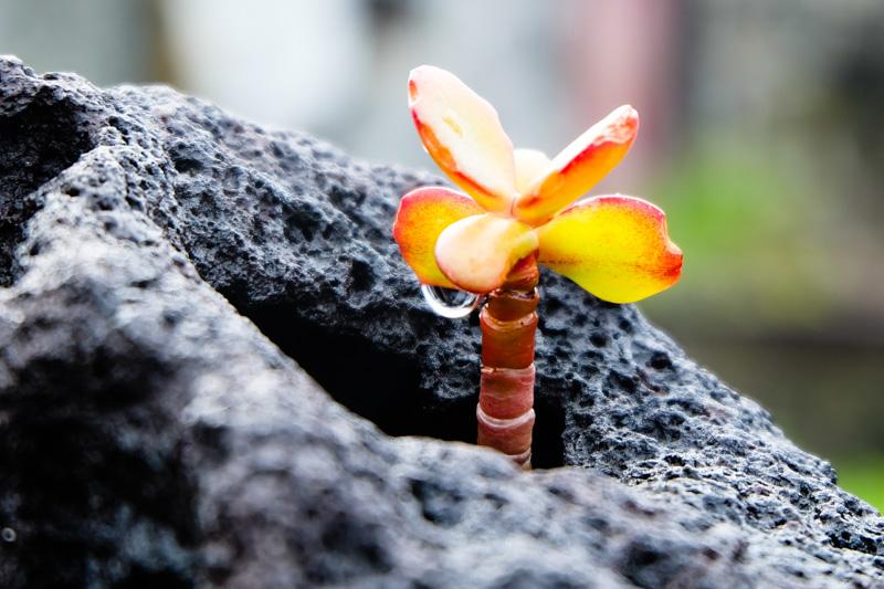 Viaggio alle Azzorre lava
