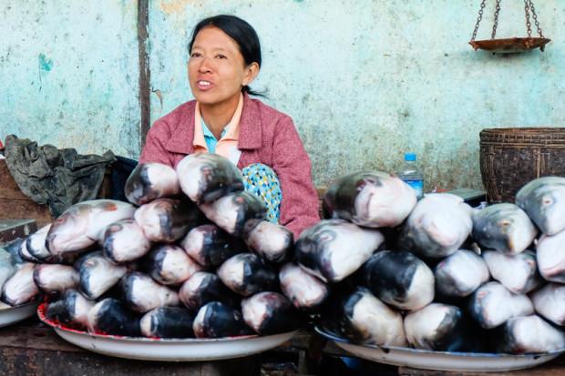 viaggio in Birmania, pesce