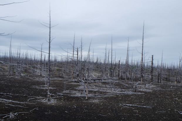 Kamchatka: la foresta pietrificata