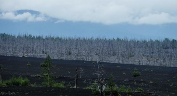 viaggio in Kamchatka foresta pietrificata