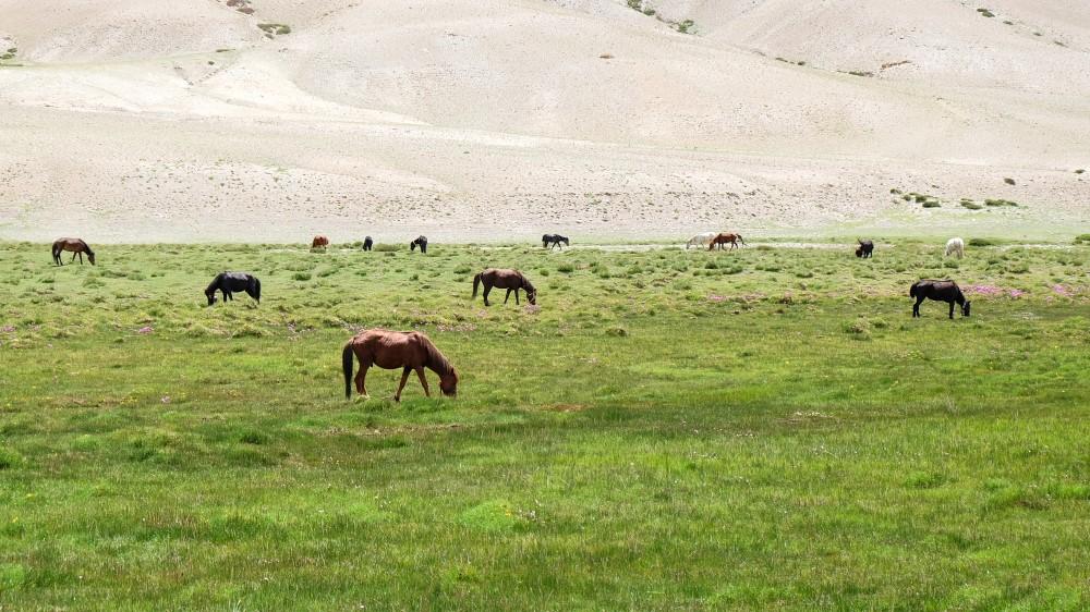 viaggio in ladakh trek cavalli