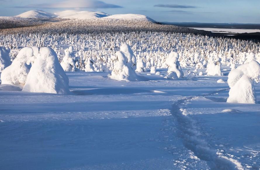 viaggio in lapponia inverno sentinelle artico