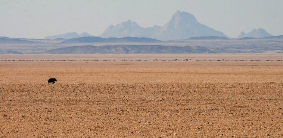viaggio in namibia struzzo