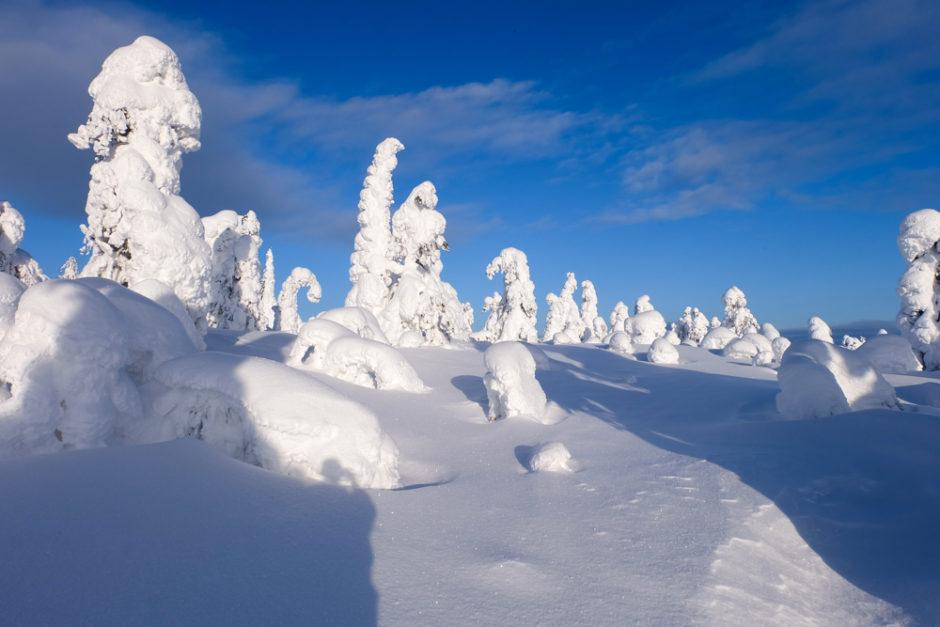 viaggio inverno lapponia abeti ghiaccio finlandia libri finlandia scandinavia
