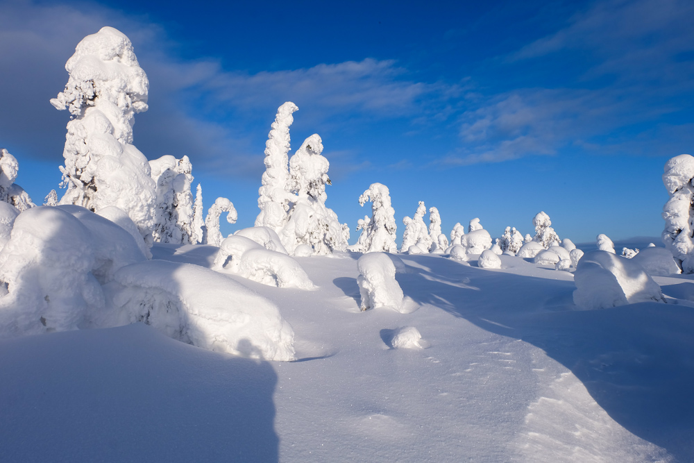 viaggio inverno lapponia abeti ghiaccio finlandia