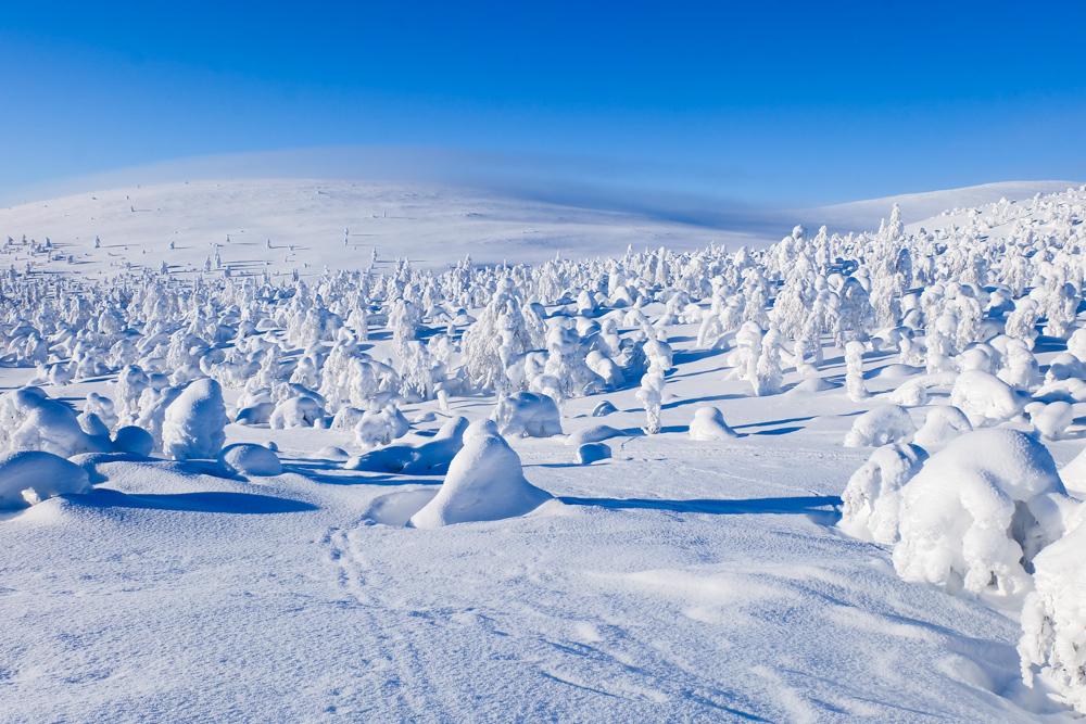 viaggio inverno lapponia pallas yllastunturi collina galaverna