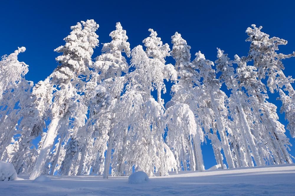 viaggio inverno lapponia pallas yllastunturi foresta ghiaccio